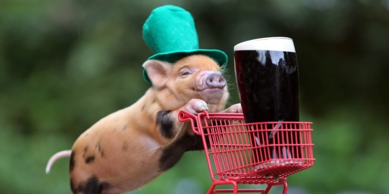 cute-pig-pushing-red-plastic-trolley-wearing-saint-patricks-day-leprechaun-green-hat